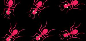Read more about the article Die Karawane der scharlachroten Ameisen